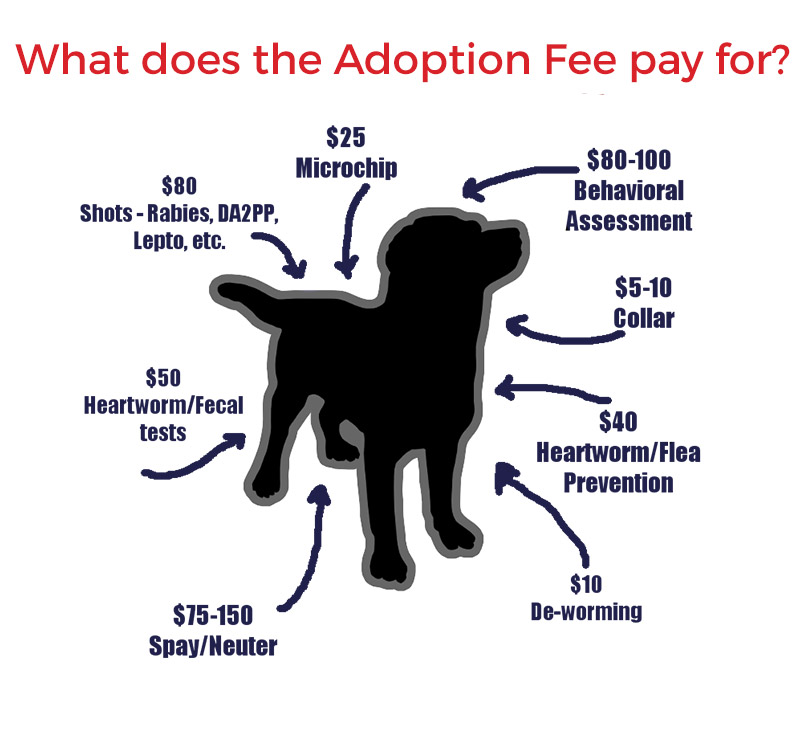 How Much Would It Cost To Adopt A Dog