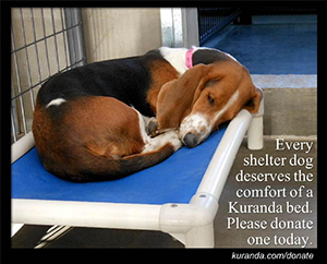 Kuranda bed donations